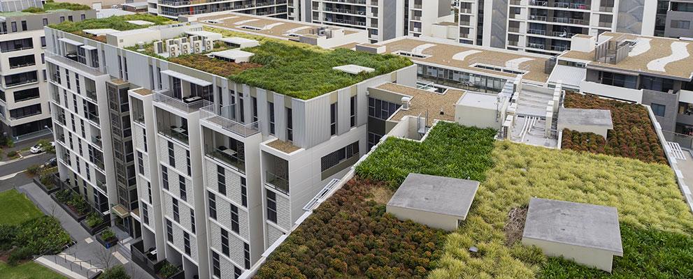 ¿Pueden los techos verdes reducir la isla de calor urbana?